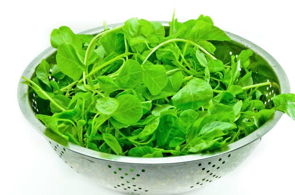 Bayam Kaya akan Vitamin. Sumber: minyakikan.co