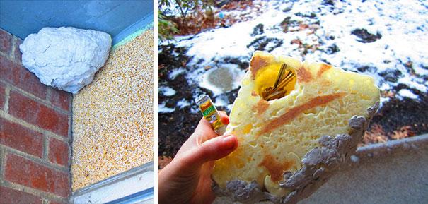 Sarang lebah sebagai tempat penyimpanan