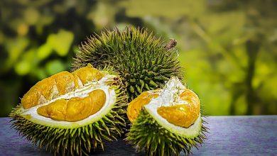 Photo of Wisata Kebun Durian Hanya 15 Ribu, Bisa Makan Durian Sepuasnya!